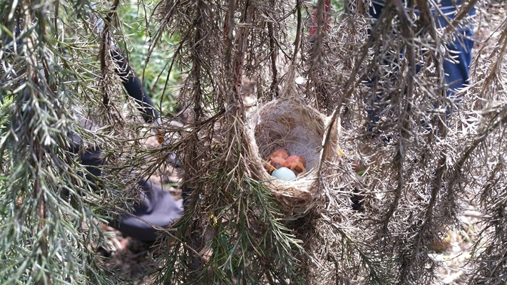 Photo Competition 2018 - New - 11 Alyce Hoffmann Fritz Baby Birds